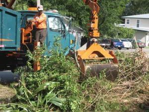 Post-Hurricane Season Clean Up